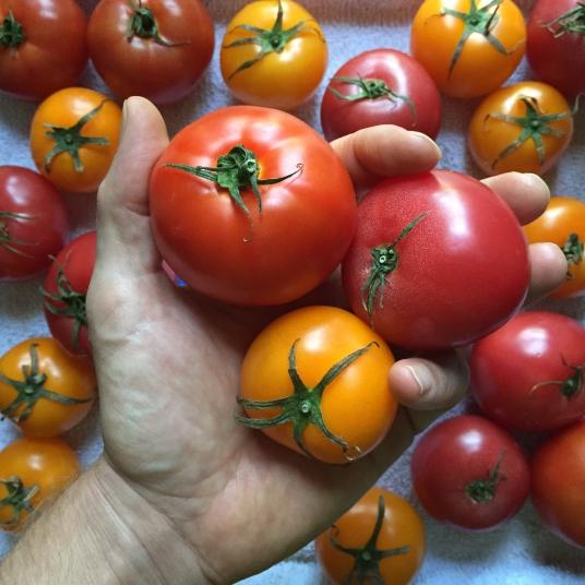 Strawberry Gazpacho - Tomatoes